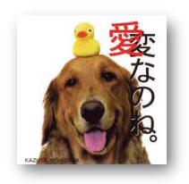 愛なのね。 西沢和弥